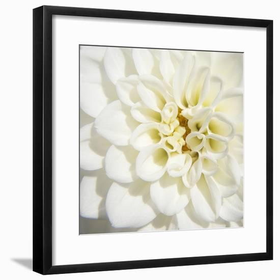 White Dahlia-Karen Ussery-Framed Premium Photographic Print