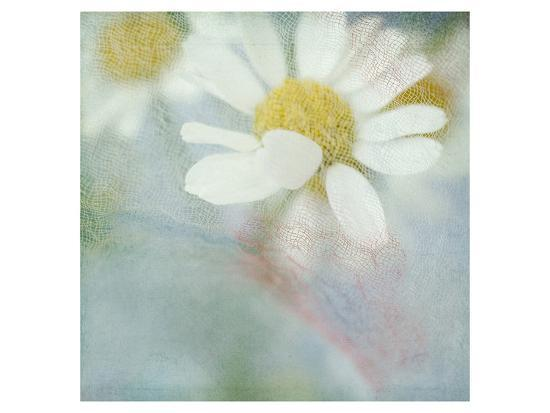 White Daisy I-Judy Stalus-Art Print