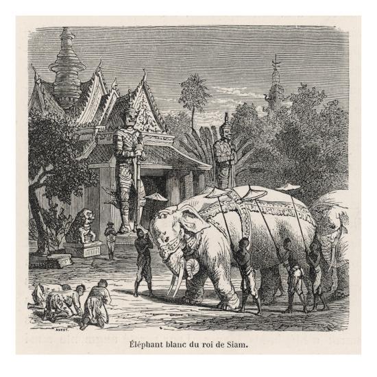 White Elephant Siam--Giclee Print