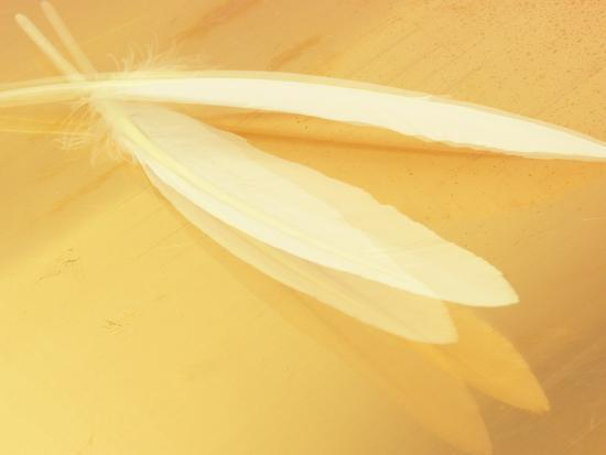 White Feathers on Yellow Background--Photographic Print