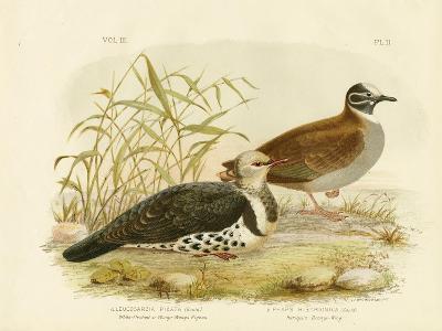 White-Fleshed Pigeon or Wonga Pigeon, 1891-Gracius Broinowski-Giclee Print
