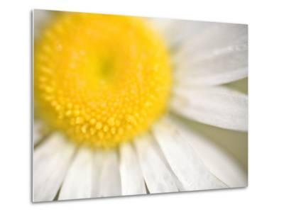 White Flower Close Up, the White River, Akansas-Andrew R. Slaton-Metal Print