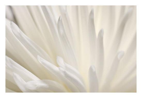 White Flower-PhotoINC Studio-Art Print