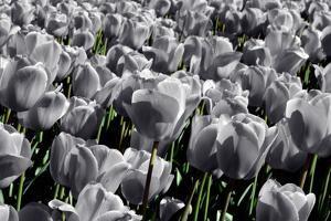 White Flowers Green Stems