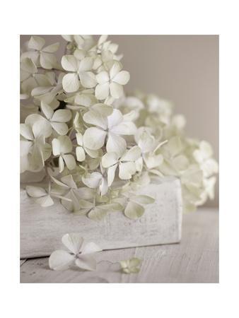 https://imgc.artprintimages.com/img/print/white-flowers_u-l-pyoanc0.jpg?p=0