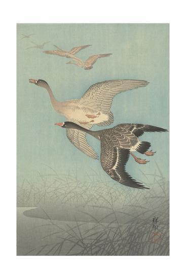 White-Fronted Geese in Flight, 1925-36-Shozaburo Watanabe-Giclee Print