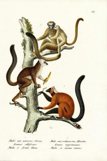 White-Fronted Lemur, 1824-Karl Joseph Brodtmann-Giclee Print