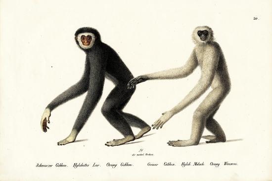 White-Handed Gibbon, 1824-Karl Joseph Brodtmann-Giclee Print