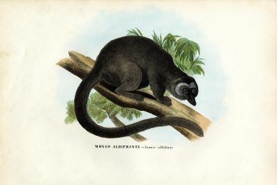 White-Headed Brown Lemur, 1863-79-Raimundo Petraroja-Giclee Print