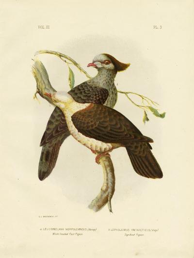 White-Headed Fruit Pigeon, 1891-Gracius Broinowski-Giclee Print