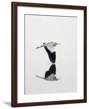 White Heron-Floridapfe from S.Korea Kim in cherl-Framed Photographic Print