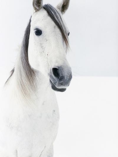 White Horse in Snow-Birgid Allig-Premium Photographic Print