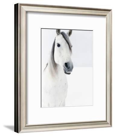 White Horse in Snow-Birgid Allig-Framed Photographic Print