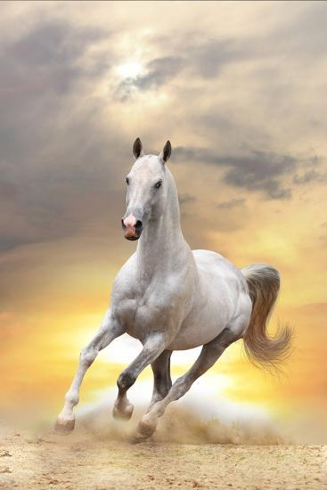 White Horse in Sunset-mari_art-Photographic Print