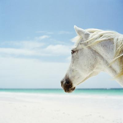 https://imgc.artprintimages.com/img/print/white-horse-on-beach-close-up_u-l-q10cx8o0.jpg?p=0