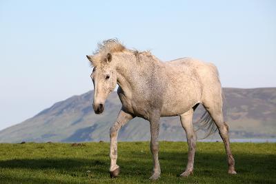 White Horse Portrait-Targn Pleiades-Photographic Print