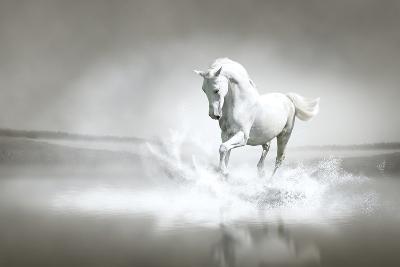 White Horse Running Through Water-varijanta-Art Print