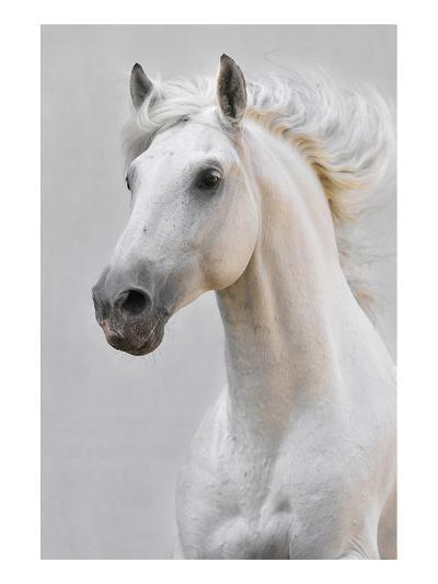 White Horse Stallion--Art Print