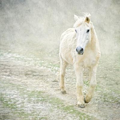 White Horse Walking along Stony Path-Christiana Stawski-Photographic Print