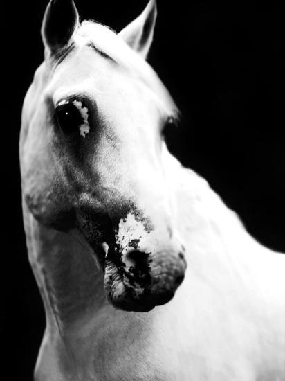 White Horse-Tim Lynch-Photographic Print