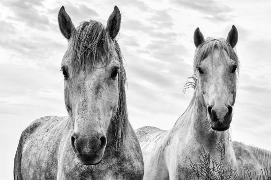 White Horses, Camargue, France-Nadia Isakova-Photographic Print