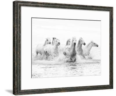 White Horses of Camargue Running Through the Water, Camargue, France-Nadia Isakova-Framed Photographic Print