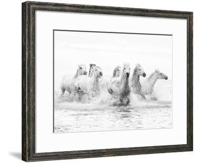 White Horses of Camargue Running Through the Water, Camargue, France-Nadia Isakova-Framed Photographic Print