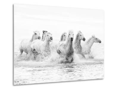 White Horses of Camargue Running Through the Water, Camargue, France-Nadia Isakova-Metal Print