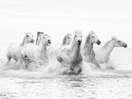 White Horses of Camargue Running Through the Water, Camargue, France-Nadia Isakova-Photographic Print