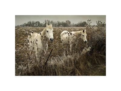 White Horses-David Winston-Giclee Print