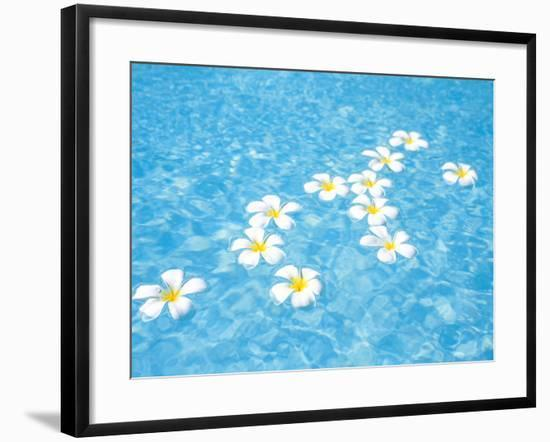 White Jasmines Floating on Water--Framed Photographic Print