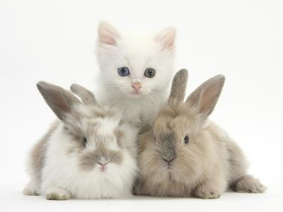 White Kitten and Baby Rabbits-Mark Taylor-Photographic Print