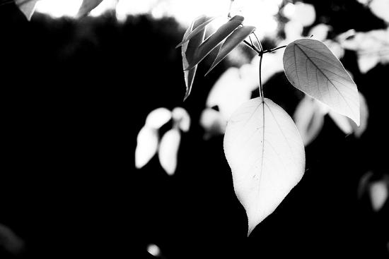 White Leaves-Bergina Leka-Photographic Print
