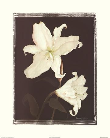 https://imgc.artprintimages.com/img/print/white-lilies-in-chocolate_u-l-f8ttq50.jpg?p=0