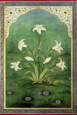 https://imgc.artprintimages.com/img/print/white-lilies_u-l-pjd1sw0.jpg?p=0