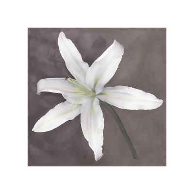 White Lily-Erin Clark-Giclee Print