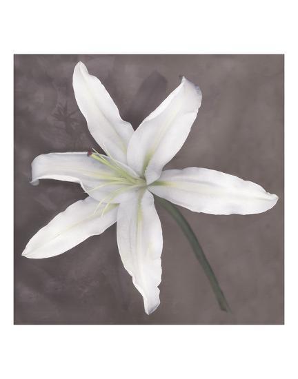 White Lily-Erin Clark-Art Print