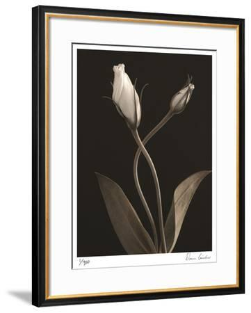 White Lisianthus III-Donna Geissler-Framed Giclee Print