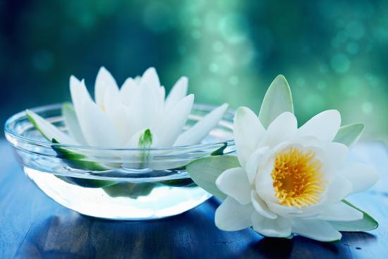 White Lotus Flower Photographic Print By Olga Miltsova Artcom