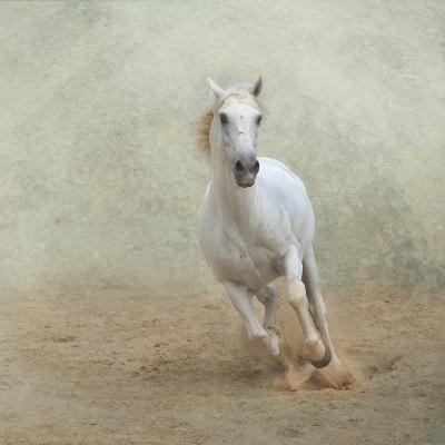 White Lusitano Horse Galloping-Christiana Stawski-Photographic Print