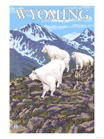 https://imgc.artprintimages.com/img/print/white-mountain-goat-family-wyoming_u-l-q1go9lm0.jpg?p=0