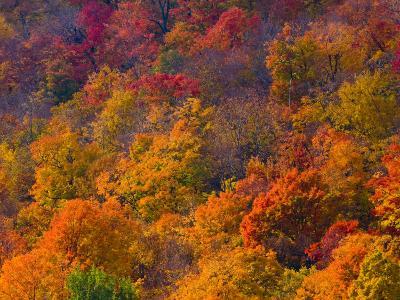 White Mountain National Park, New Hampshire, USA-Alan Copson-Photographic Print