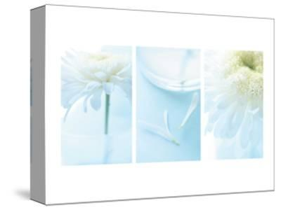White Mums Triptych