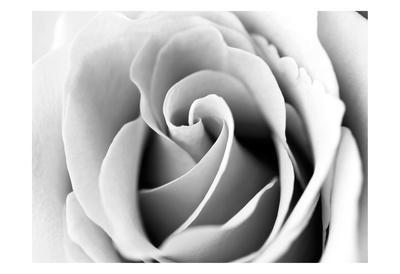 https://imgc.artprintimages.com/img/print/white-noise-rose-3_u-l-f8ren10.jpg?p=0