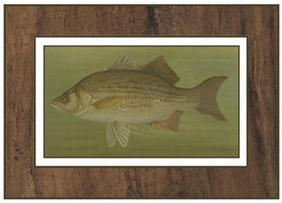 White or Silver Bass-Harris-Art Print