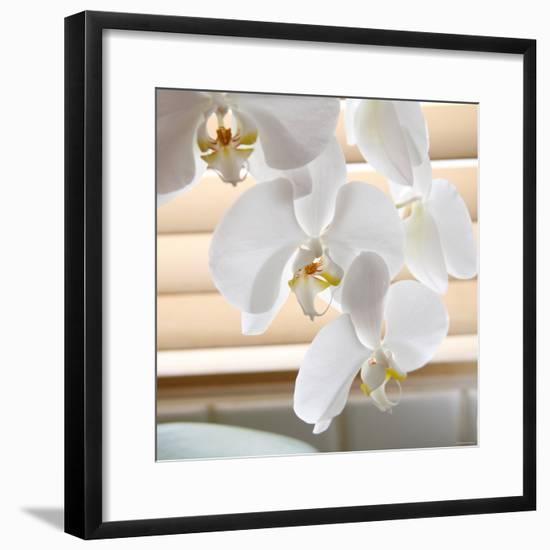 White Orchids II-Nicole Katano-Framed Photo