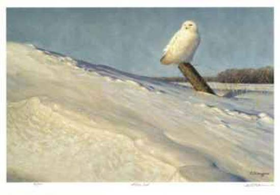 White Owl-Claudio D'Angelo-Collectable Print
