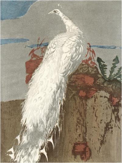 White Peacock--Art Print