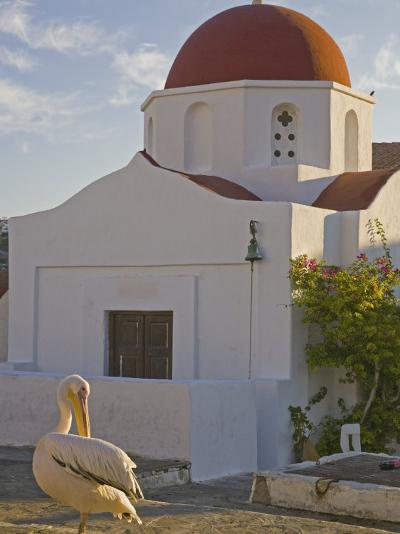 White Pelican Preening, Hora, Mykonos, Greece-Darrell Gulin-Photographic Print