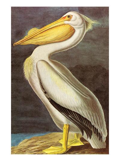 White Pelican-John James Audubon-Art Print